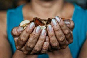 کرسی صلح – تغییرات اقلیمی و تاثیرات آن بر امنیت غذایی